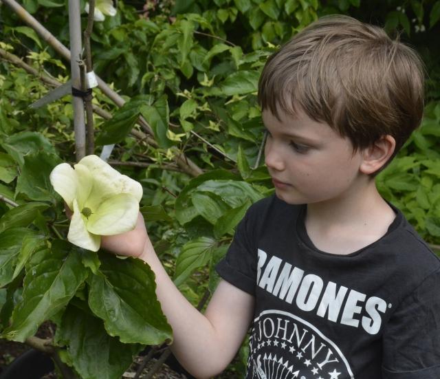 Størrelsen på 'Venus' illustreres godt i en barnehånd.