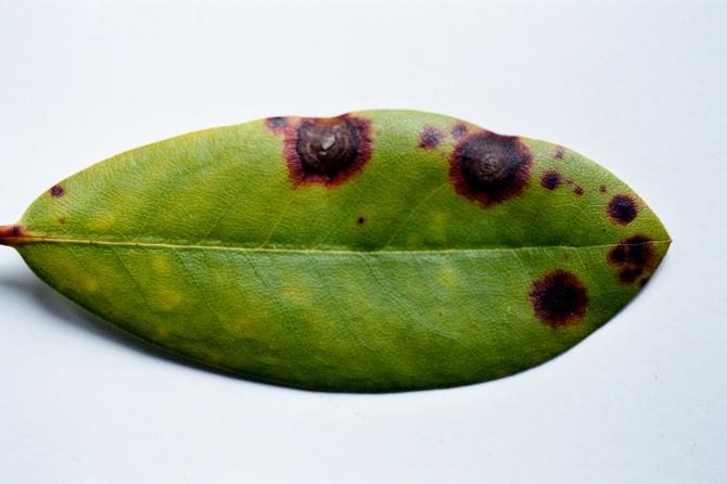 erotiske blader amateur milf porn