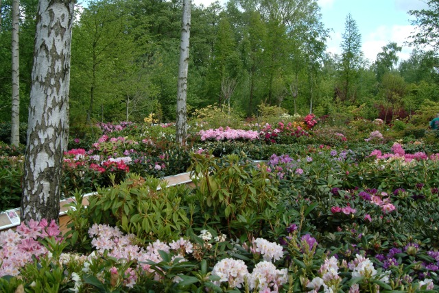 Over 600 forskellige Rhododendron finder du i afdelingen.