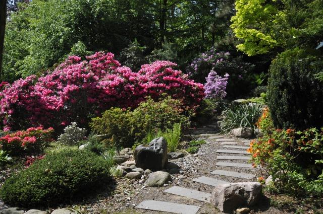 Et af havens stiforløb slut i maj. Nu fristes man igen til at gå på opdagelse bag de store rosa Rhododendron.