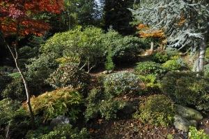 Fra terrassen er der igen udsyn mod havens baggrund. Rhododendron planterne i forgrunden er stillet med større afstand, og kunde helt store er flyttet længere bagud i haven.
