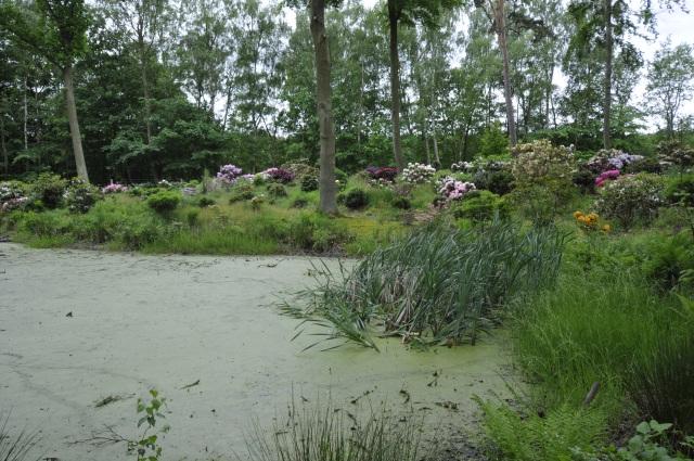 Dansk natur og smukke Rhododendron byder på oplevelser året rundt.