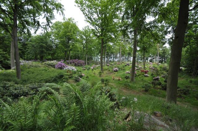 Flere steder i parken kan dusigten nydes fra bænke. Baggrunden mellem træerne skimtes Øresund