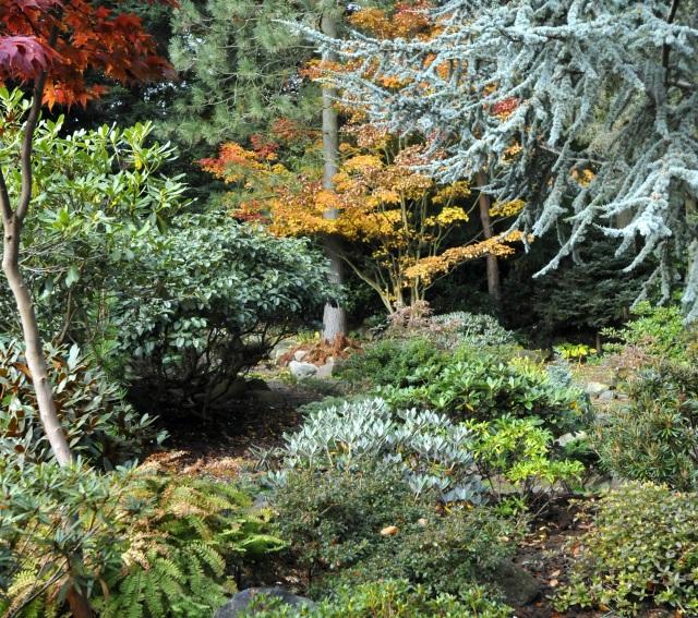 Så smukt kan der være i en surbundshave i oktober. Løvfældende Acer (Japanske Løn/Ahorn) kombineret med Rhododendrons forsk. løvfarver er nærmest perfekt.