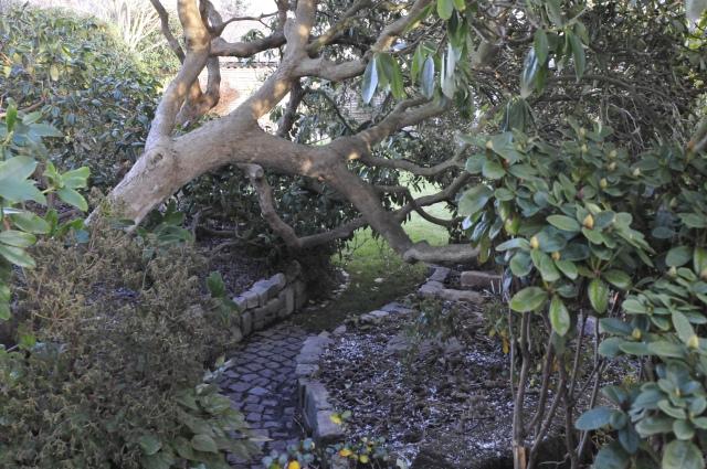 Her gik vi indtil i går under Rhododendron-træernes kroner.