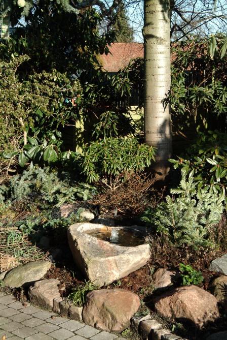 Grangrene stukket lodret i jorden, foran små planter, skærmer mod forårssolen.