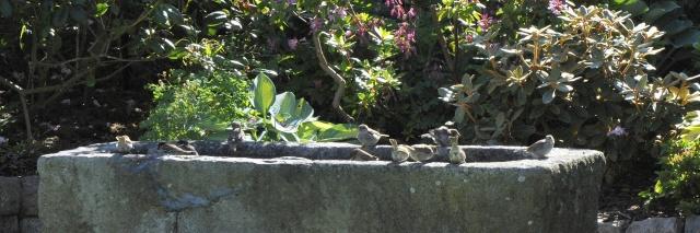 Lige nu er det spurve, men alle slags fugle er glade for at drikke fra lavereliggende sten nede i truget.