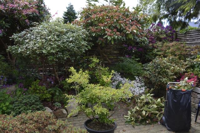 Dværg Rhododendron – AT HAVE EN HAVE