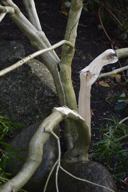 Denne plante er total skadet.