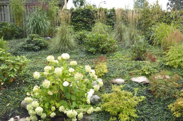 """Stærkt skrånende rhododendronhave med indplantede """"græsser"""" og Hydrangea"""