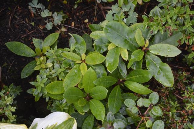 Storbladede, men også småbladede frøplanter i forkanten afa et bed.