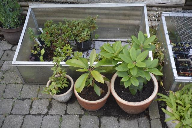 3 forskellige frøplanter i pæne potter (jeg bruger normalt sorte plastpotter).