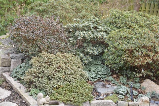 R. 'Maruschka', R. impeditum, R. radicans, R. pseudochrysanthum, R. 'Babuschka', Cyclamen hederifolium.