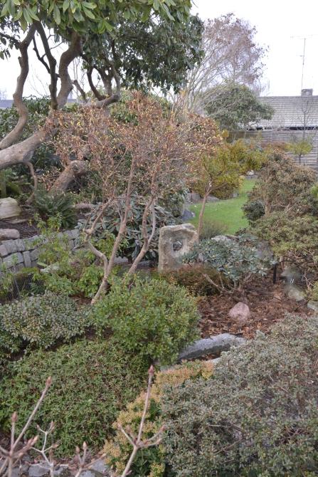 Smukke Rhododendronstammer, større og små stedsegrønne og løvfældende Rhododendron står for havens særlige miljø.