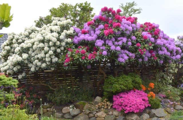 AT HAVE EN HAVE   af Niels Skjøldberg, specialist i Rhododendron